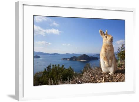 Feral Domestic Rabbit (Oryctolagus Cuniculus) Standing On Hind Legs On Coast-Yukihiro Fukuda-Framed Art Print