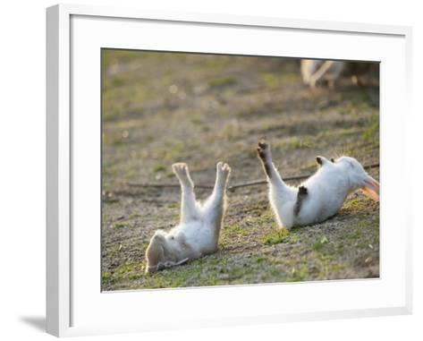 Feral Domestic Rabbit (Oryctolagus Cuniculus) Baby Rabbits-Yukihiro Fukuda-Framed Art Print
