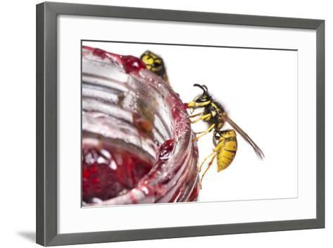 Common Wasps (Vespula Vulgaris) Feeding On A Pot Of Jam, Photographed Against A White Background-Alex Hyde-Framed Art Print
