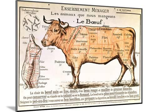 Beef: Diagram Depicting the Different Cuts of Meat--Mounted Giclee Print