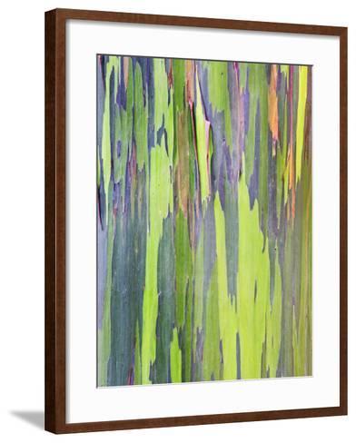 Rainbow Eucalyptus Trunk Near Hana Maui Hawaii Usa Framed Canvas