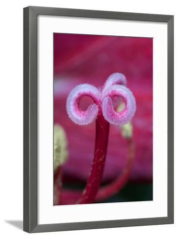 California. a Flower Stigma-Jaynes Gallery-Framed Art Print