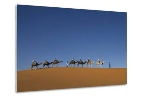 Morocco, Sahara. a Row of Camels Travels the Ridge of a Sand Dune-Brenda Tharp-Metal Print