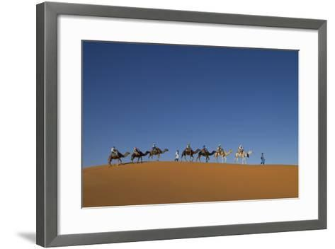 Morocco, Sahara. a Row of Camels Travels the Ridge of a Sand Dune-Brenda Tharp-Framed Art Print