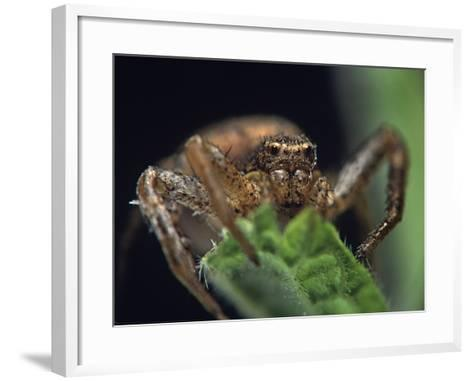 Jumping Spider, New Mexico-Tim Fitzharris-Framed Art Print