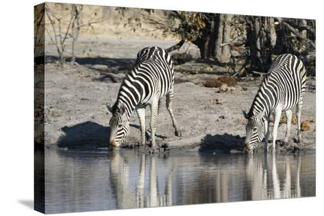 Burchell's Zebras, Khwai Concession, Okavango Delta, Botswana-Sergio Pitamitz-Stretched Canvas Print