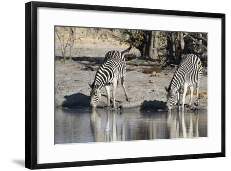 Burchell's Zebras, Khwai Concession, Okavango Delta, Botswana-Sergio Pitamitz-Framed Art Print