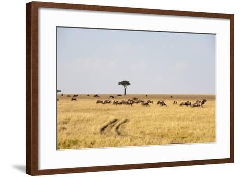 Wildebeest, Masai Mara, Kenya-Sergio Pitamitz-Framed Art Print
