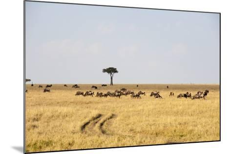 Wildebeest, Masai Mara, Kenya-Sergio Pitamitz-Mounted Photographic Print