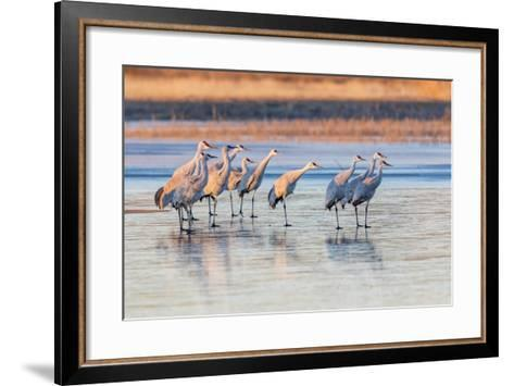 New Mexico, Bosque Del Apache Natural Wildlife Refuge. Sandhill Cranes on Ice at Sunrise-Jaynes Gallery-Framed Art Print
