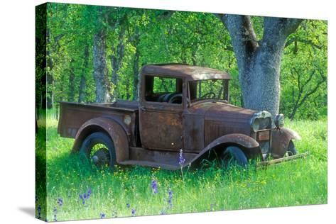 A Rusting 1931 Ford Pickup Truck Sitting in a Field under an Oak Tree-John Alves-Stretched Canvas Print