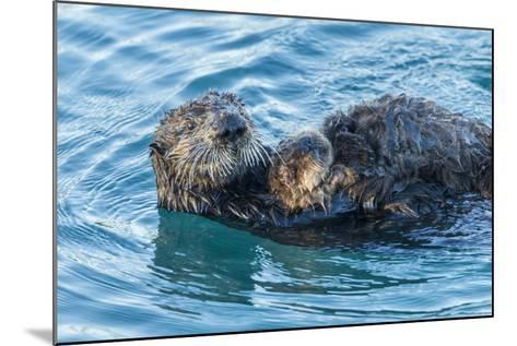 California, Morro Bay. Sea Otter Parent and Pup-Jaynes Gallery-Mounted Photographic Print