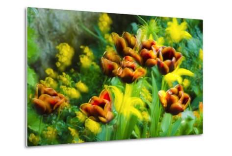 Tulips at Claude Monet House and Gardens, Giverny, France-Russ Bishop-Metal Print