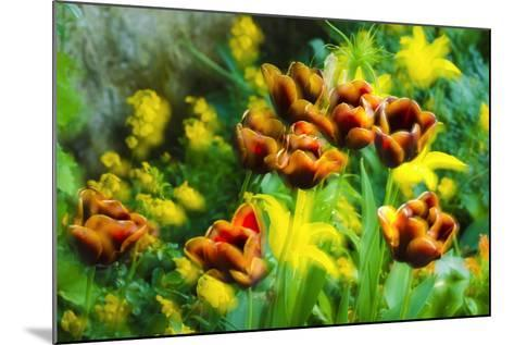 Tulips at Claude Monet House and Gardens, Giverny, France-Russ Bishop-Mounted Photographic Print