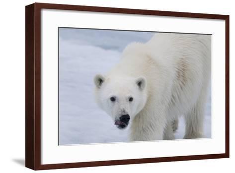 Europe, Norway, Svalbard. Polar Bear Cub Close-Up-Jaynes Gallery-Framed Art Print