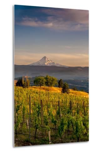 Washington State, Lyle. Mt. Hood Seen from a Vineyard Along the Columbia River Gorge-Richard Duval-Metal Print