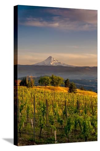 Washington State, Lyle. Mt. Hood Seen from a Vineyard Along the Columbia River Gorge-Richard Duval-Stretched Canvas Print