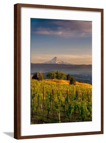 Washington State, Lyle. Mt. Hood Seen from a Vineyard Along the Columbia River Gorge-Richard Duval-Framed Art Print