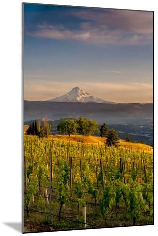 Washington State, Lyle. Mt. Hood Seen from a Vineyard Along the Columbia River Gorge-Richard Duval-Mounted Photographic Print