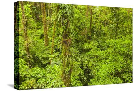 Central America, Costa Rica, Arenal. Rain Forest Foliage-Jaynes Gallery-Stretched Canvas Print