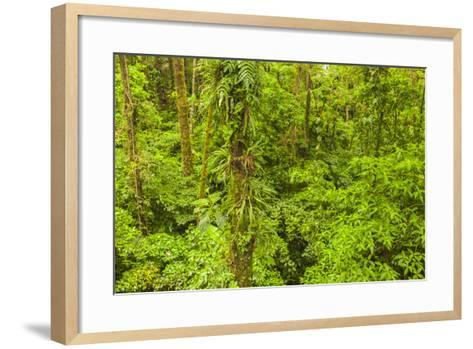 Central America, Costa Rica, Arenal. Rain Forest Foliage-Jaynes Gallery-Framed Art Print