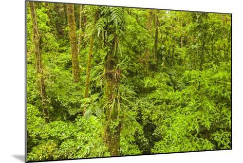 Central America, Costa Rica, Arenal. Rain Forest Foliage-Jaynes Gallery-Mounted Photographic Print