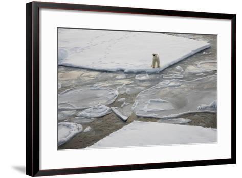 Norway, Svalbard, Spitsbergen. Polar Bear Stands on Sea Ice-Jaynes Gallery-Framed Art Print