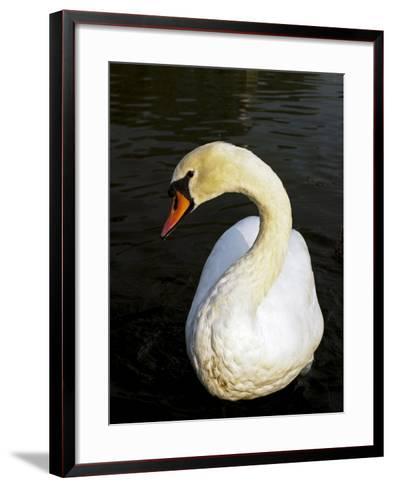 England, London, City of Westminster-Pamela Amedzro-Framed Art Print