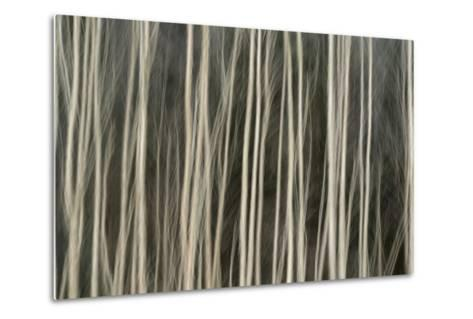 Abstract Tree Pattern, Great Smoky Mountains National Park, Tennessee-Adam Jones-Metal Print