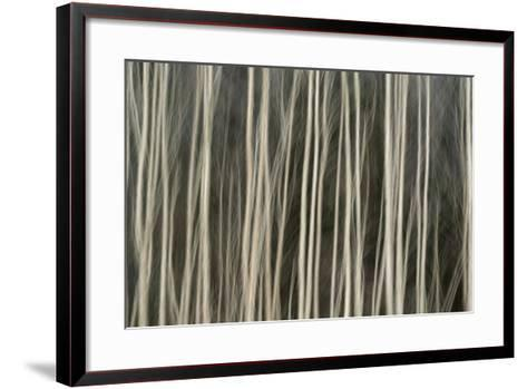 Abstract Tree Pattern, Great Smoky Mountains National Park, Tennessee-Adam Jones-Framed Art Print