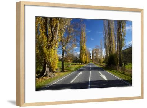 Poplar Trees in Autumn at Entrance to Lawrence, Central Otago, South Island, New Zealand-David Wall-Framed Art Print