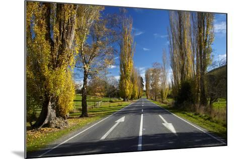 Poplar Trees in Autumn at Entrance to Lawrence, Central Otago, South Island, New Zealand-David Wall-Mounted Photographic Print