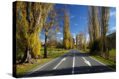 Poplar Trees in Autumn at Entrance to Lawrence, Central Otago, South Island, New Zealand-David Wall-Stretched Canvas Print