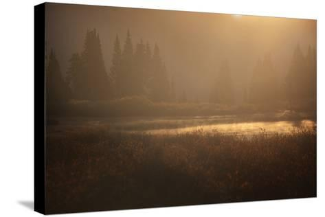 Colorado, Little Molas Lake. Mist Rises Off Wetlands at Sunrise-Jaynes Gallery-Stretched Canvas Print