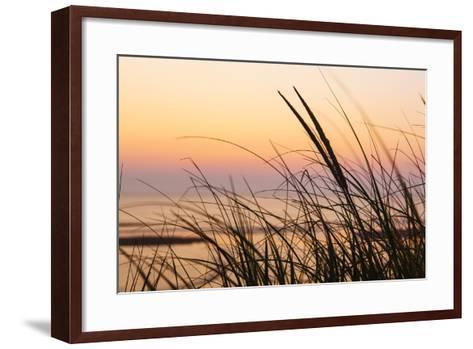 Dune Grasses at Coast Guard Beach in the Cape Cod National Seashore. Eastham, Massachusetts-Jerry and Marcy Monkman-Framed Art Print