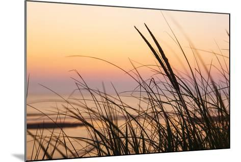 Dune Grasses at Coast Guard Beach in the Cape Cod National Seashore. Eastham, Massachusetts-Jerry and Marcy Monkman-Mounted Photographic Print