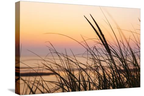 Dune Grasses at Coast Guard Beach in the Cape Cod National Seashore. Eastham, Massachusetts-Jerry and Marcy Monkman-Stretched Canvas Print