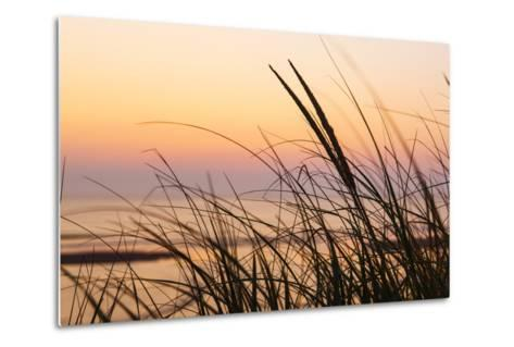 Dune Grasses at Coast Guard Beach in the Cape Cod National Seashore. Eastham, Massachusetts-Jerry and Marcy Monkman-Metal Print