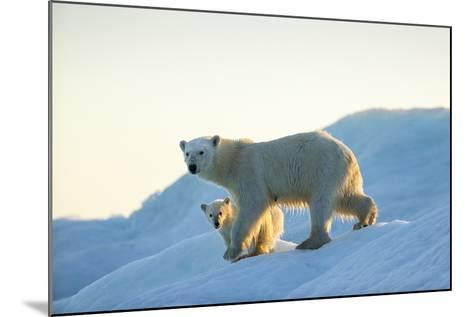 Polar Bear and Cub Walking on Sea Ice at Sunset Near Harbor Islands,Canada-Paul Souders-Mounted Photographic Print