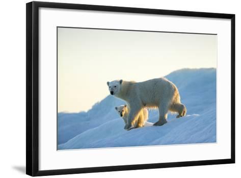 Polar Bear and Cub Walking on Sea Ice at Sunset Near Harbor Islands,Canada-Paul Souders-Framed Art Print