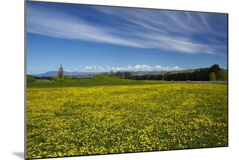 Field of Dandelions, Near Greta Valley, North Canterbury, South Island, New Zealand-David Wall-Mounted Photographic Print