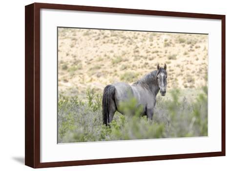 Colorado, Sand Wash Basin. Close-Up of Wild Horse-Jaynes Gallery-Framed Art Print
