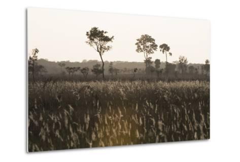 Savanna Rupununi, Guyana-Pete Oxford-Metal Print