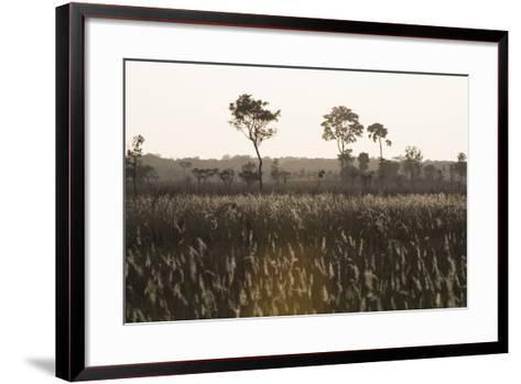 Savanna Rupununi, Guyana-Pete Oxford-Framed Art Print