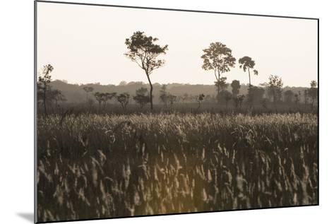 Savanna Rupununi, Guyana-Pete Oxford-Mounted Photographic Print