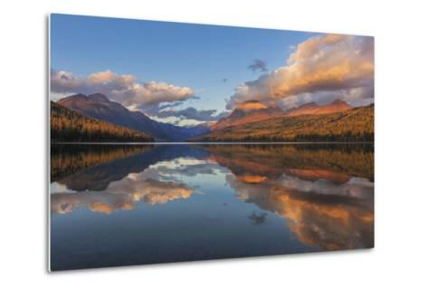 Sunset Light on Autumn Tamarack Trees over Bowman Lake in Glacier National Park, Montana Usa-Chuck Haney-Metal Print