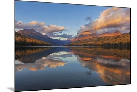 Sunset Light on Autumn Tamarack Trees over Bowman Lake in Glacier National Park, Montana Usa-Chuck Haney-Mounted Photographic Print