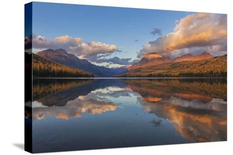 Sunset Light on Autumn Tamarack Trees over Bowman Lake in Glacier National Park, Montana Usa-Chuck Haney-Stretched Canvas Print