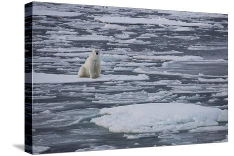 Norway, Svalbard, Spitsbergen. Polar Bear Rests on Sea Ice-Jaynes Gallery-Stretched Canvas Print