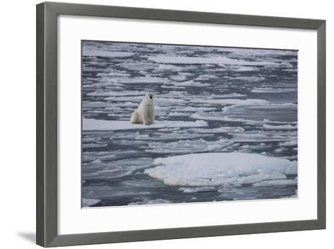 Norway, Svalbard, Spitsbergen. Polar Bear Rests on Sea Ice-Jaynes Gallery-Framed Art Print